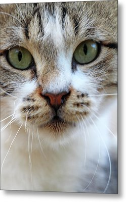 Metal Print featuring the photograph Big Green Eyes by Munir Alawi