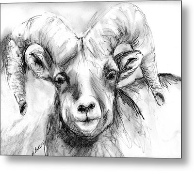Metal Print featuring the drawing Big Horn Sheep by Marilyn Barton