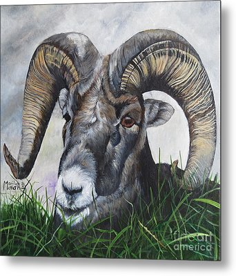 Big Horned Sheep Metal Print