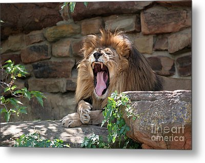 Big Mouth Metal Print by Jeannie Burleson
