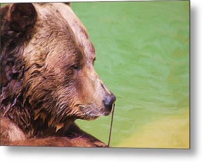 Big Old Bear With A Tiny Stick Metal Print by Karol Livote