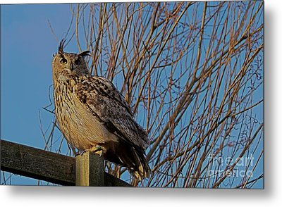 Big Owl II Metal Print