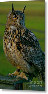 Metal Print featuring the photograph Big Owl by Louise Fahy