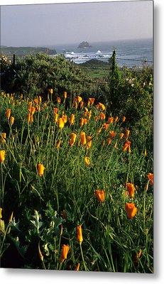 Big Sur Poppies Metal Print by Eric Foltz