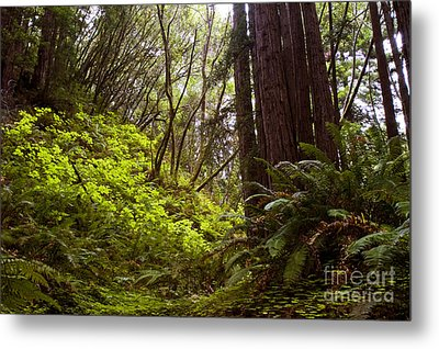 Metal Print featuring the photograph Big Sur Red Woods by Gary Brandes