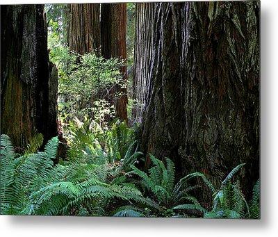 Big Trees And Ferns Metal Print