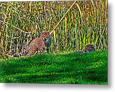 Big Yawn By Little Cub Metal Print by Miroslava Jurcik