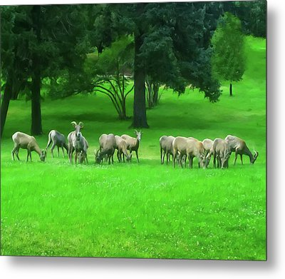Metal Print featuring the digital art Bighorn Sheep Ewes  by Chris Flees