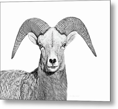 Metal Print featuring the photograph Bighorn Sheep Ram Black And White by Jennie Marie Schell