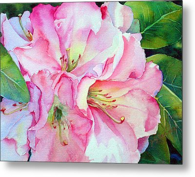 Biltmore Rhodies Metal Print by Judy Mercer