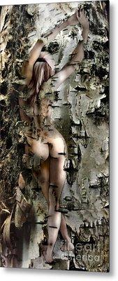Birch Beauty Metal Print by Tlynn Brentnall