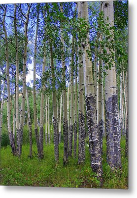 Birch Forest Metal Print by Julie Lueders