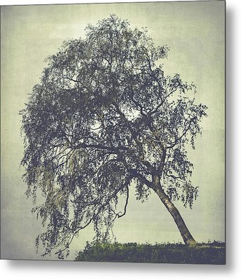 Metal Print featuring the photograph Birch In The Mist by Ari Salmela