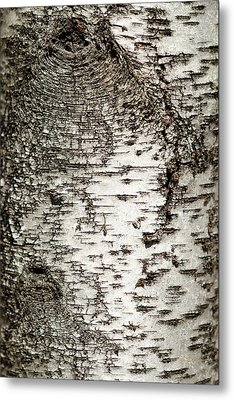 Metal Print featuring the photograph Birch Tree Bark by Christina Rollo