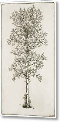 Birch Tree Metal Print by Charles Harden
