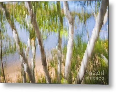 Birch Trees On Lake Shore Metal Print