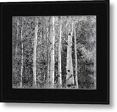 Metal Print featuring the photograph Birch Trees by Susan Kinney