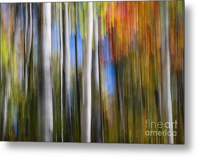 Birches In Autumn Forest Metal Print
