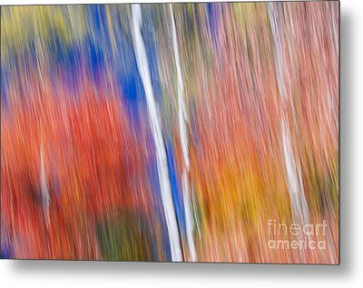 Birches In Red Forest Metal Print