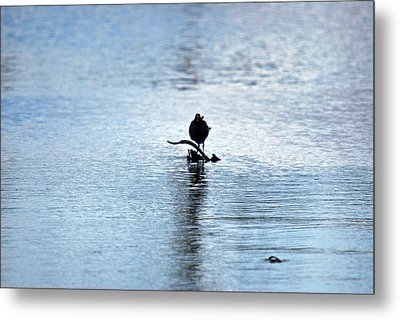 Metal Print featuring the photograph Bird 7986 by Teresa Blanton