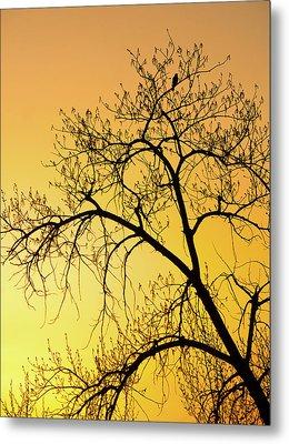 Bird At Sunset Metal Print by James Steele