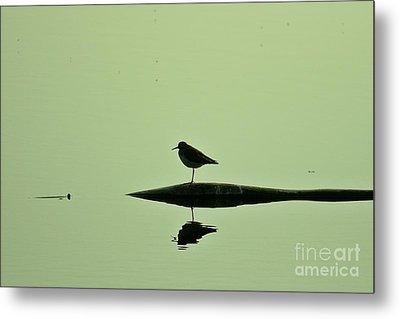 Bird In A Pond Metal Print by Mario Brenes Simon