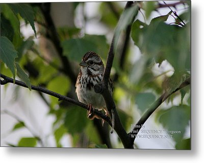 Metal Print featuring the photograph Bird In A Tree by Paul SEQUENCE Ferguson             sequence dot net