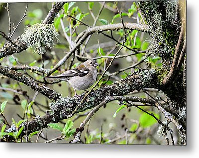 Bird In A Tree Posing Metal Print by Tommytechno Sweden