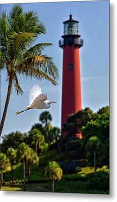 Bird In Flight Under Jupiter Lighthouse, Florida Metal Print