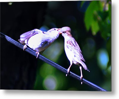 Bird Kiss Metal Print by Bill Cannon