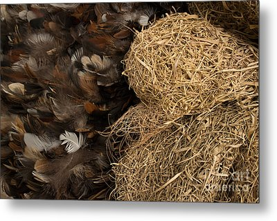 Bird Nest And Feathers Metal Print