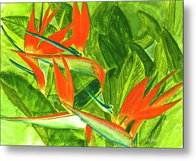Bird Of Paradise Flower #55 Metal Print by Donald k Hall