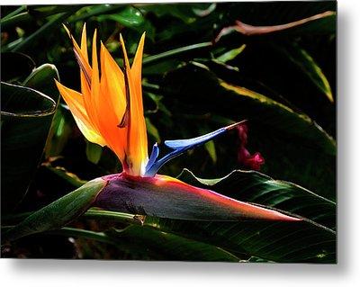 Bird Of Paradise Flower Metal Print by Brian Harig