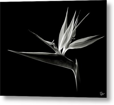 Bird Of Paradise In Black And White Metal Print by Endre Balogh