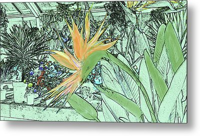Metal Print featuring the photograph Bird Of Paradise In The Hothouse by Nareeta Martin