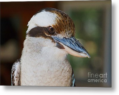 Bird Of Prey Metal Print by A New Focus Photography