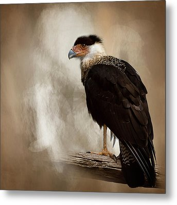 Bird Of Prey Metal Print by Cyndy Doty
