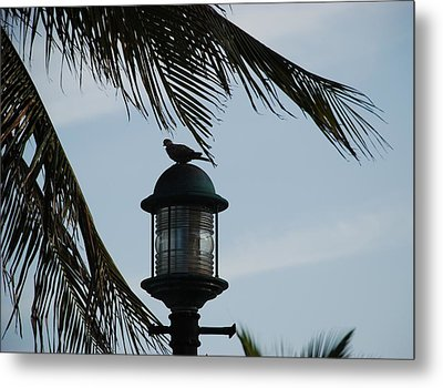 Bird On A Light Metal Print by Rob Hans