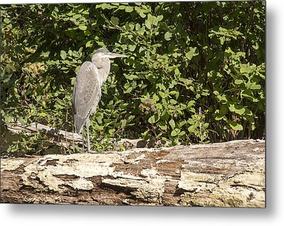 Bird On A Log Metal Print