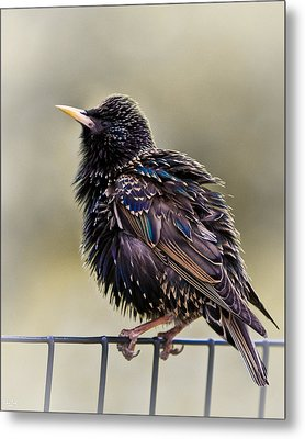 Bird On A Wire Metal Print by Chris Lord