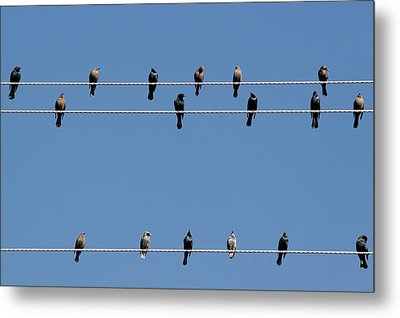 Bird On A Wire Metal Print by Christine Till