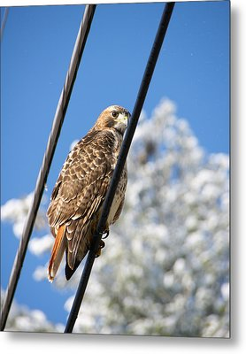 Bird On A Wire Metal Print by Edward Myers