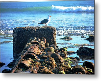 Bird On Perch At Beach Metal Print
