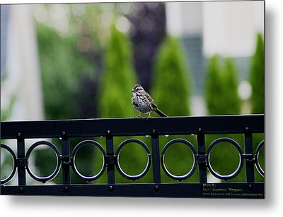Metal Print featuring the photograph Bird On The Fence by Paul SEQUENCE Ferguson             sequence dot net