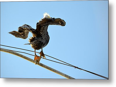 Metal Print featuring the photograph Bird On The Wire by AJ Schibig