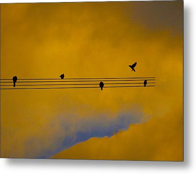 Bird Song Metal Print by Mark Blauhoefer