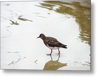 Metal Print featuring the photograph Bird Walking On Beach by Mariola Bitner