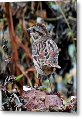 Metal Print featuring the photograph Bird With Grasshopper by Lila Fisher-Wenzel