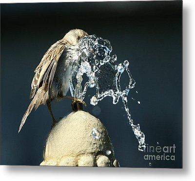 Birdbath Metal Print by Jan Piller