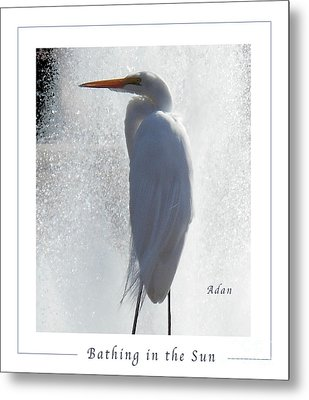 Birds And Fun At Butler Park Austin - Birds 2 Macro Poster Metal Print
